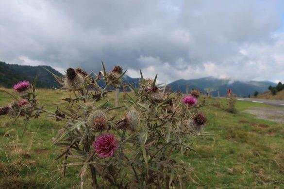 Rustikale Landschaft - Pyrenäen Durchquerung Rennrad